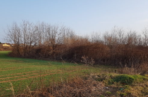 Terreno agricolo in vendita a Fagnano Olona