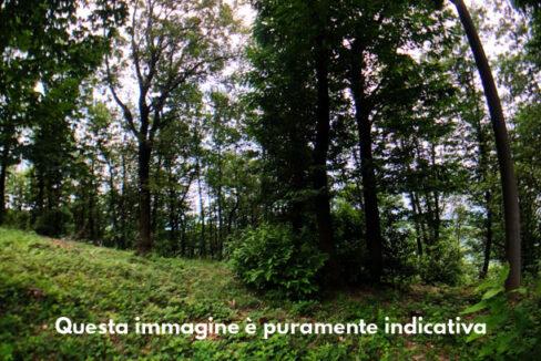 Terreno boschivo in vendita a Fagnano Olona. Proponiamo in vendita nel Comune di Fagnano Olona, a pochi minuti dall'ingresso autostradale della vicina Busto Arsizio con possibilità di accesso alla Pedemontana e alla Milano